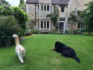 viajar y cuidar mascotas