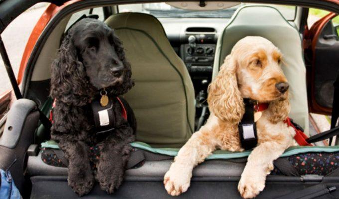 como viajar con las mascotas