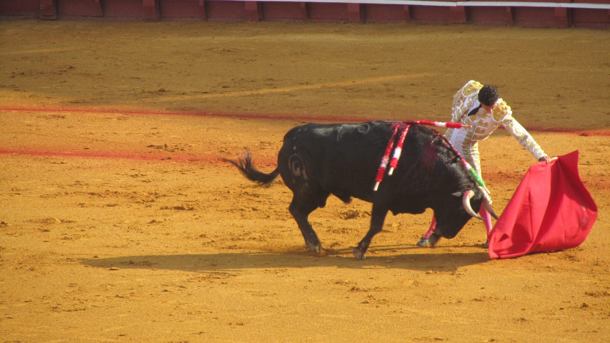 4a66979f8ed Fotos de toros de corralejas