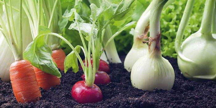cómo hacer una huerta casera: asociación de cultivos