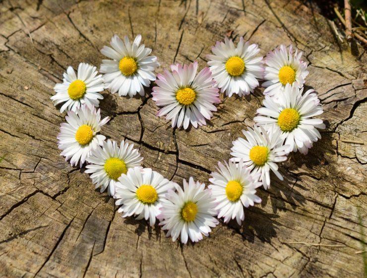 primavera amor