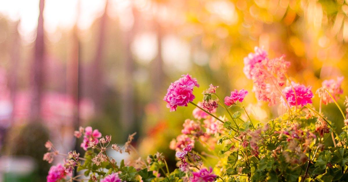 flores perfume