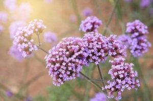 flores terapeuticas