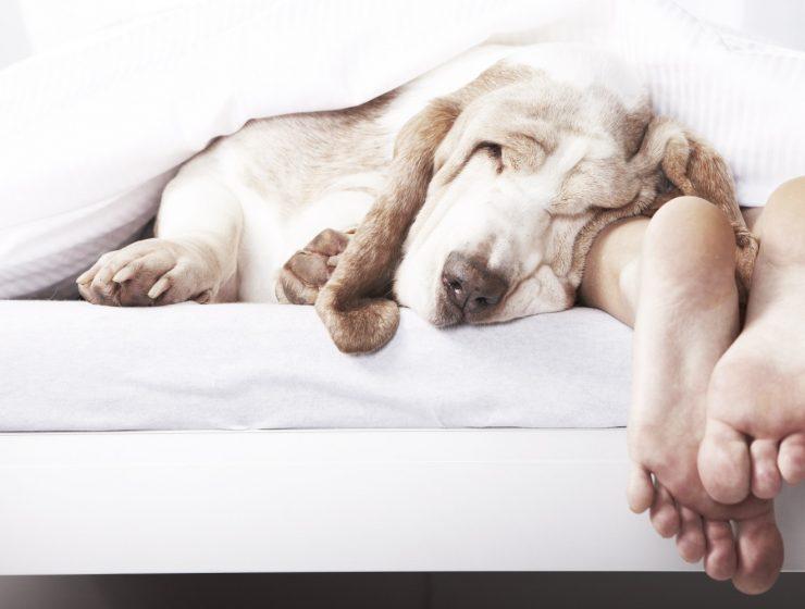 perros en la cama