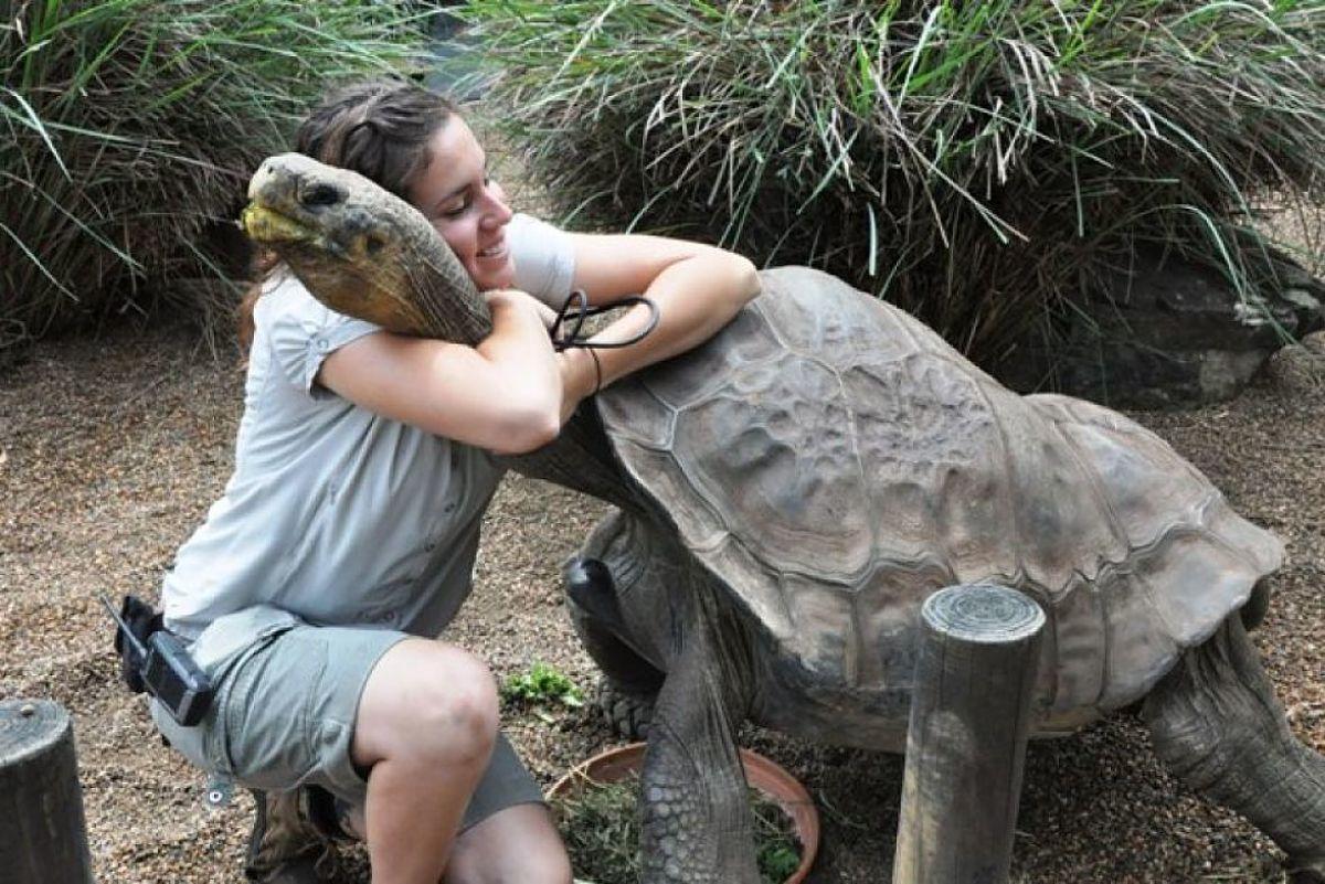 """Résultat de recherche d'images pour """"tortugas galapagos"""""""