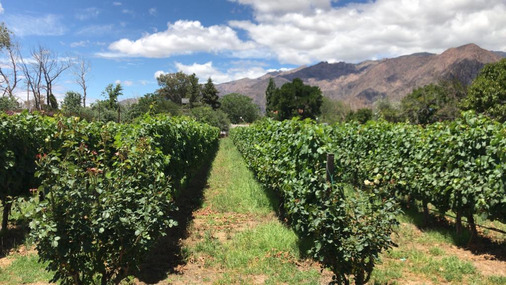 ruta del vino cafayate
