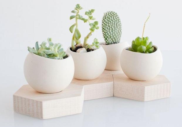 cactus donde ubicarlos