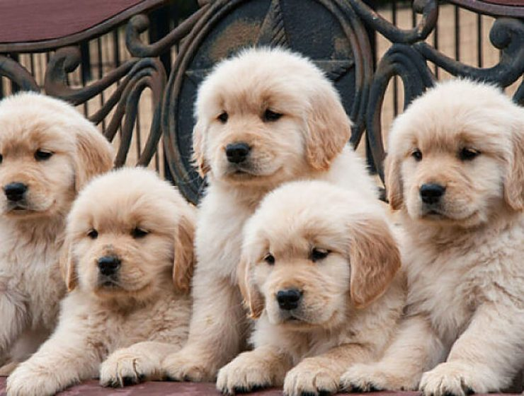 mejores razas de perros