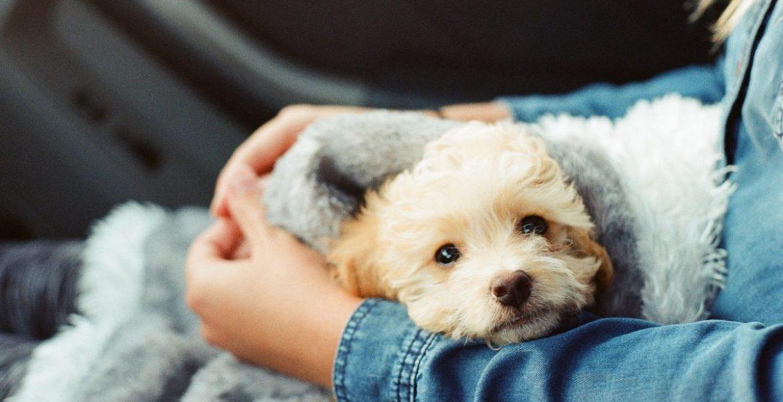 los dueños de perros viven mas