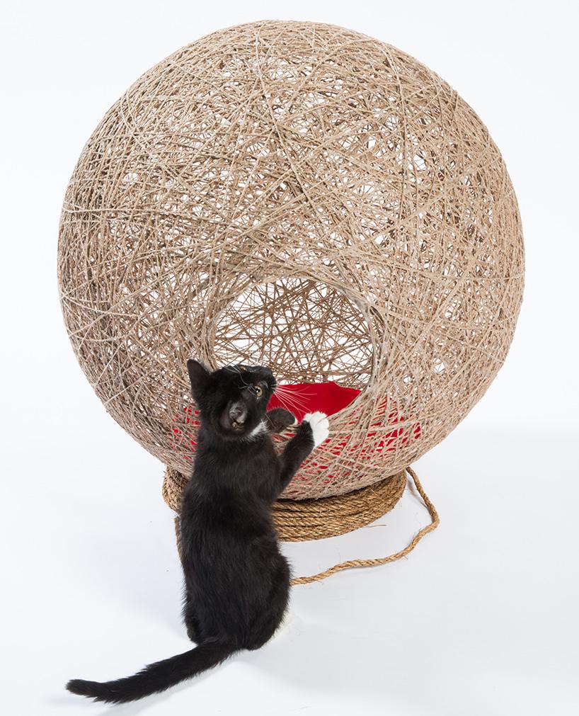 refugios para gatos