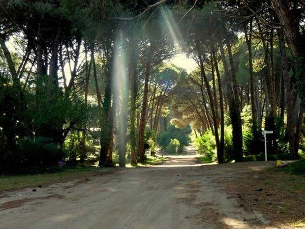 bosque carilo