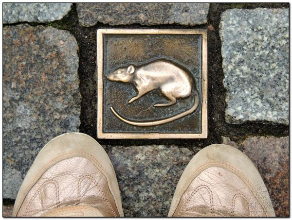 las ratas de Hamelin