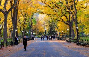 pasear por el Central Park