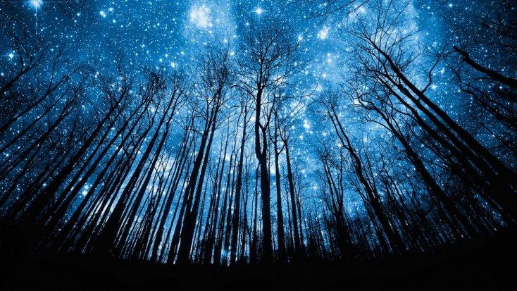 arboles universo