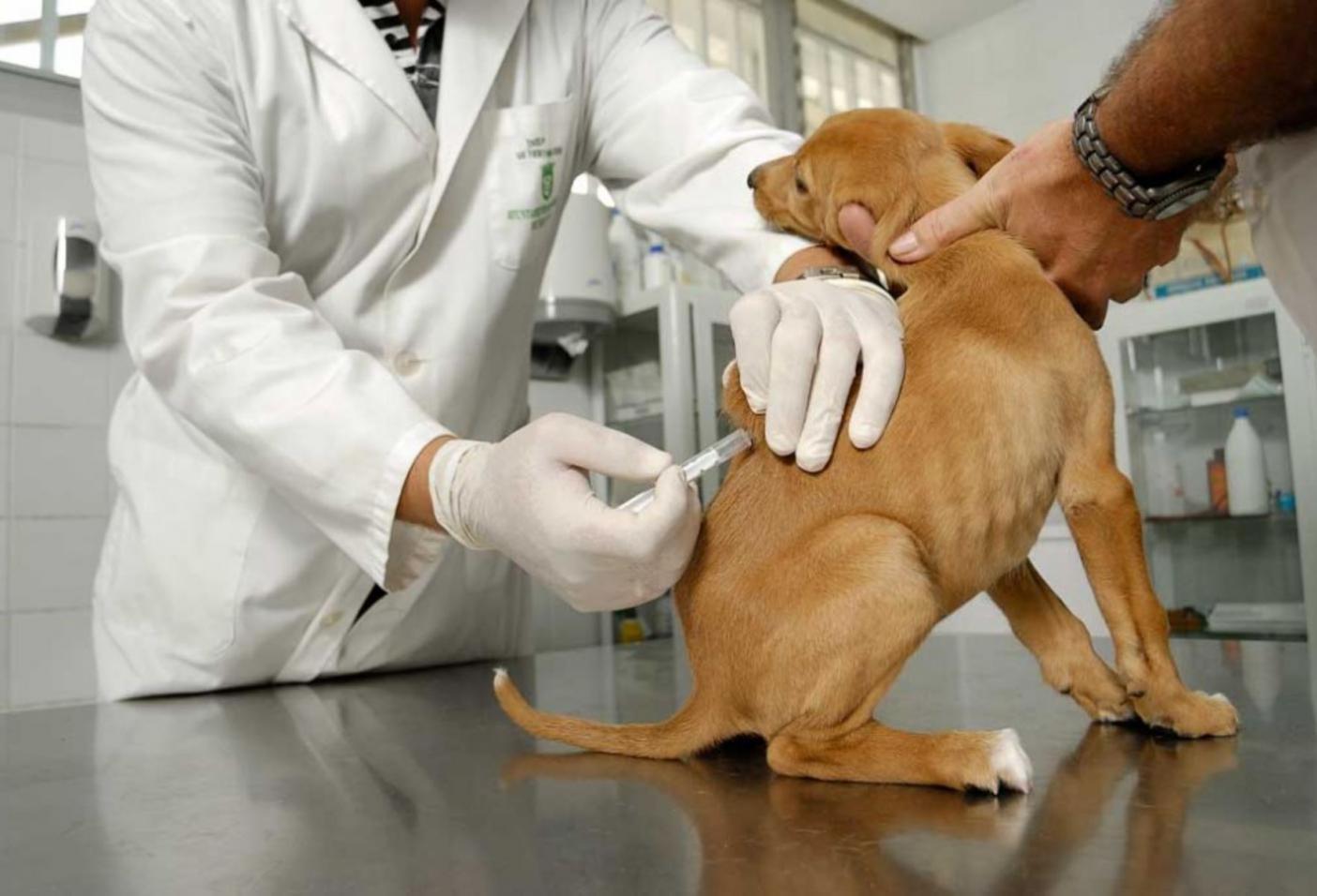 plan de vacunacion a cachorros