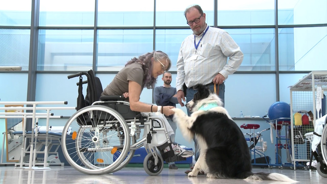 perros en hospitales