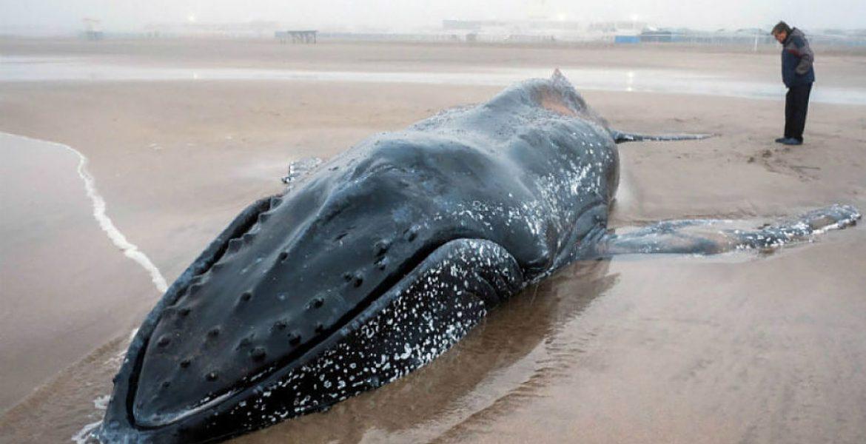 ballena Mar del Plata