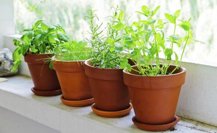 plantas hepáticas
