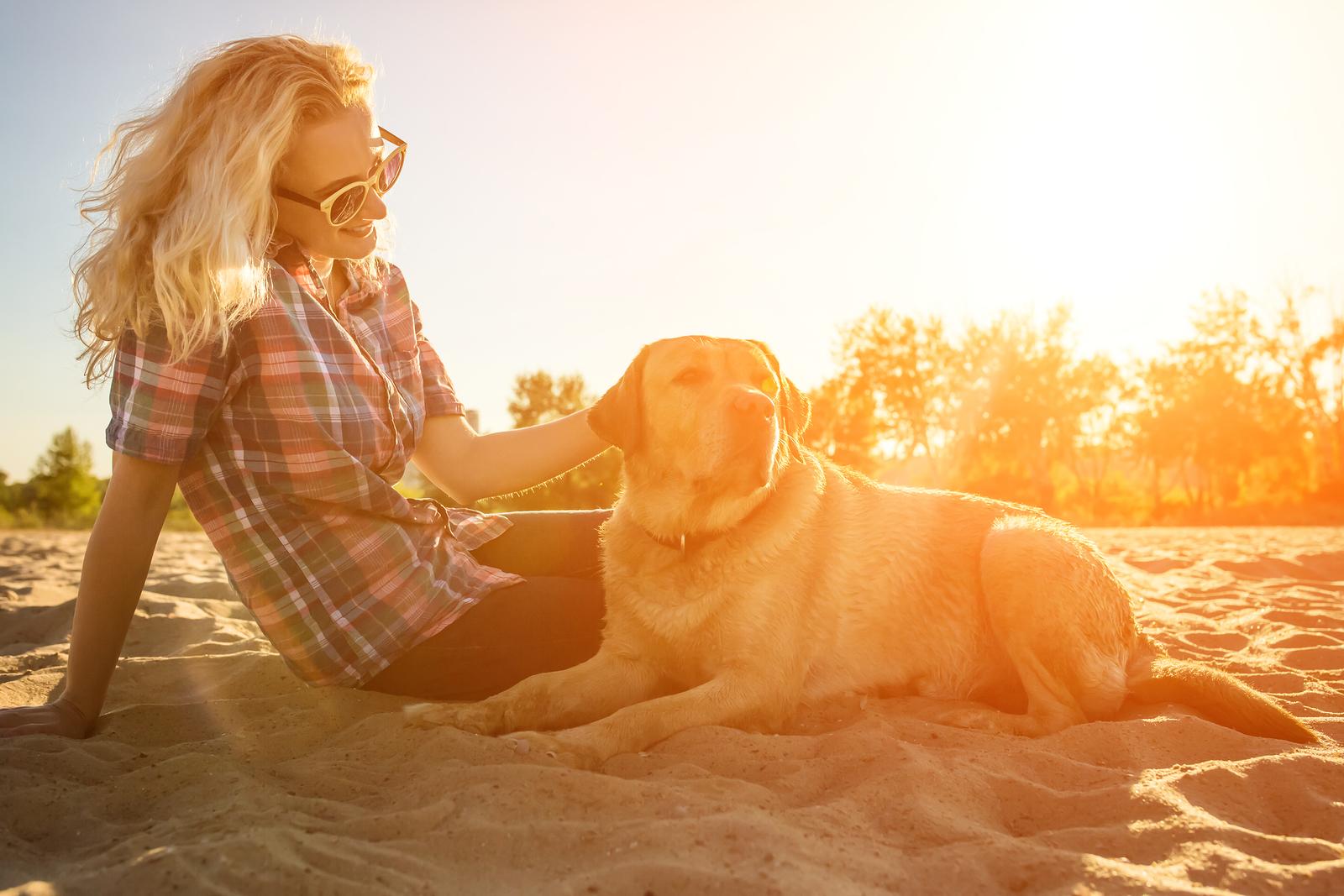 perros detectan mala persona