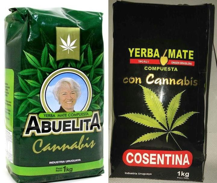 uruguay yerba con cannabis
