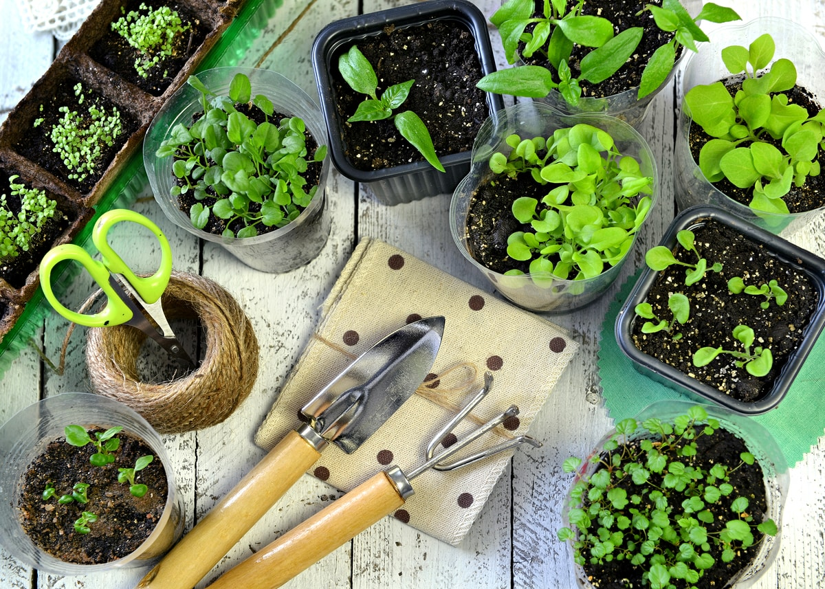 jardin vertical casero como hacer un jard n paso a siembra en casa ... de sembrar sus propios vegetales en macetas y jardines verticales, en  lacocina o en balcones. Te contamos cómo hacer un huerto en casa para ganar  salud ...