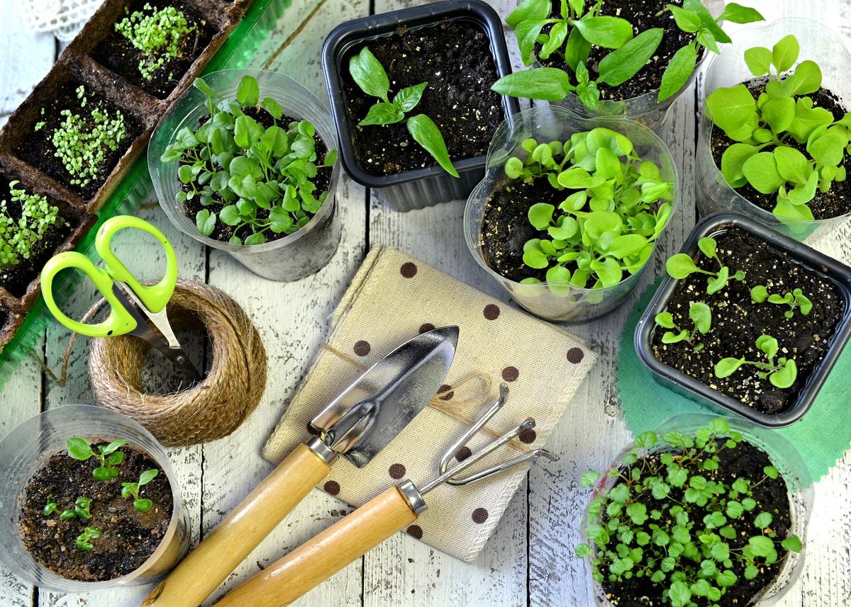 Huerta urbana plantas