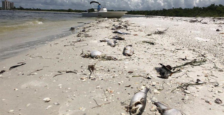marea roja Florida