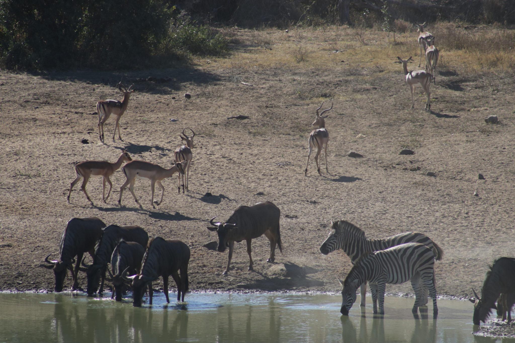 Animales en el Parque Kruger