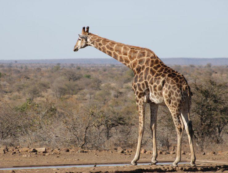 safari en sudafrica