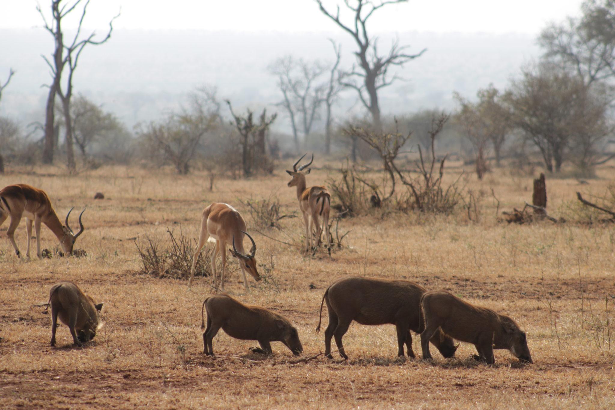 Parque Kruger donde alojarse