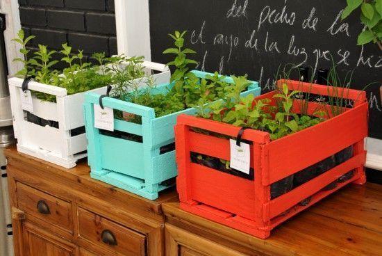 huerta en cajones de verduras reciclados