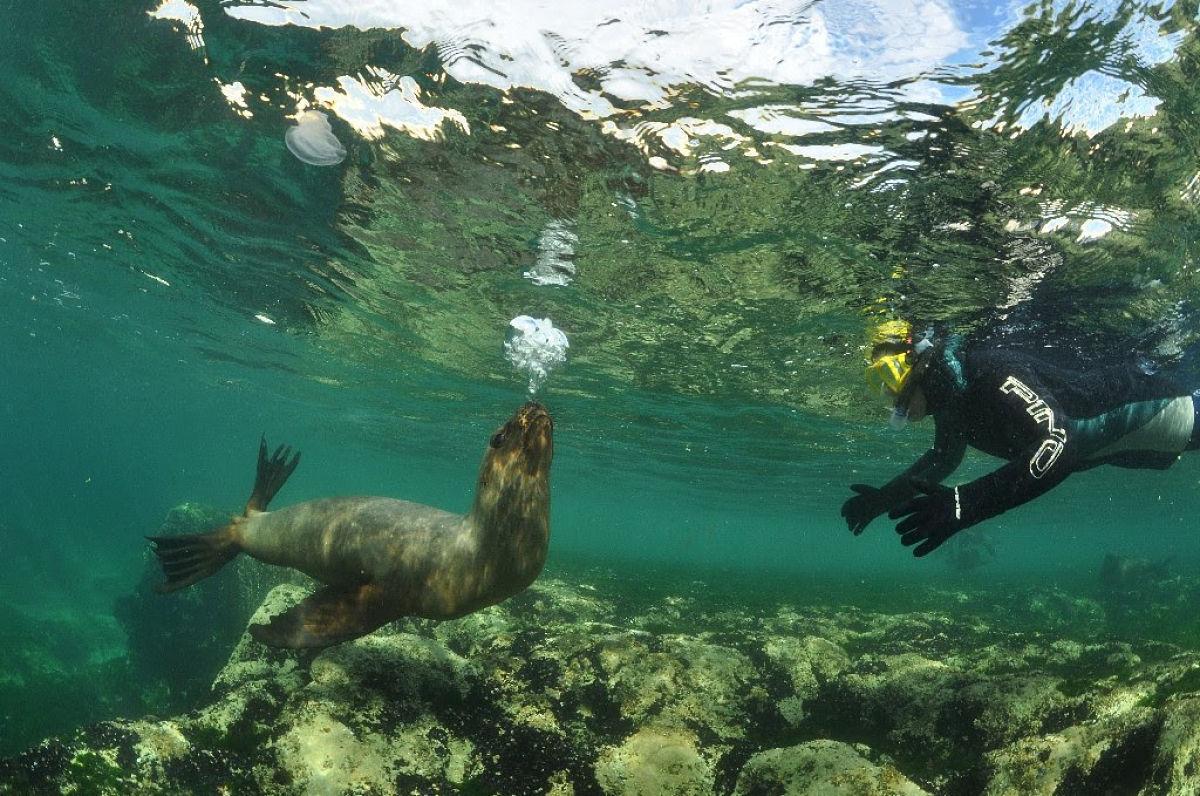 bucear en Puerto Madryn