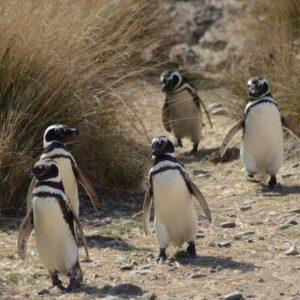 cómo llegar a Puerto Madryn