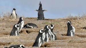 pinguinos puerto madryn