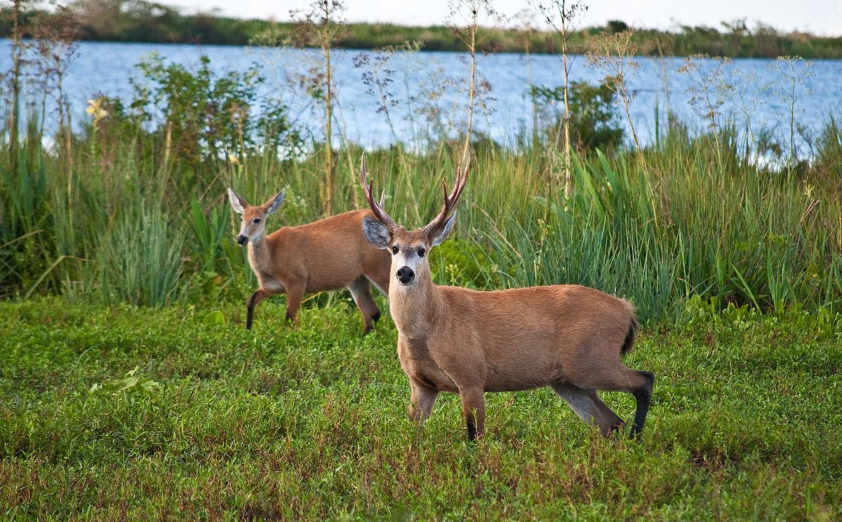 Resultado de imagen para Parque Nacional Ciervo de los Pantanos