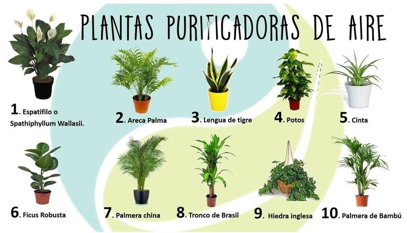 qué plantas limpian el aire