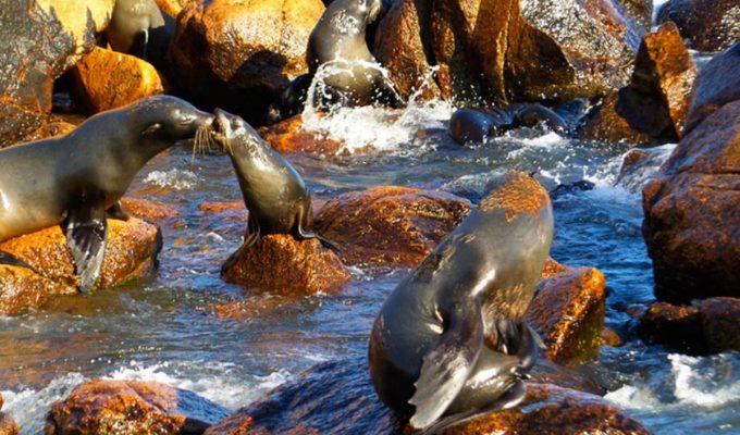 Isla de Lobos en Punta del Este