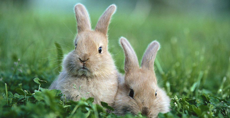 ludovica squirru horoscopo chino 2019 conejo