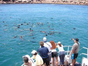 nadar con lobos marinos