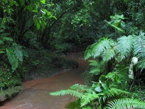 biodiversidad en la selva misionera