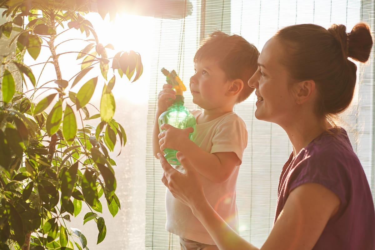 cómo cuidar las plantas