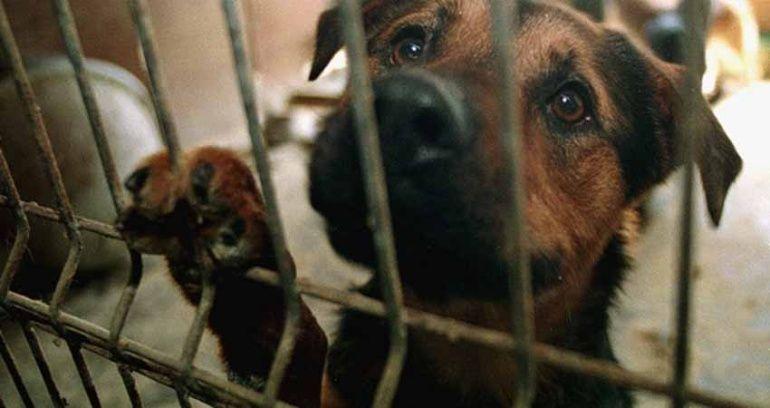 perros maltrato animal